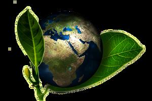 Уроки экологии введут с нового учебного года